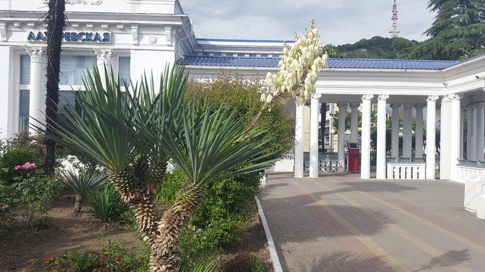 Пальма и цветы. Пальмы, Юг