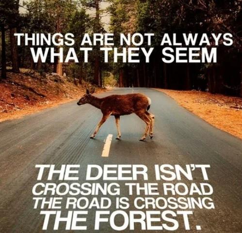 Не всегда вещи такие, как мы их видим... Экология, Лес, Вольный перевод, Дорога