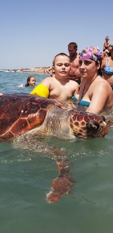 Твоё лицо, когда тебя заставляют фотографироваться с дохлой морской черепахой... Морская черепашка, Море, Туристы, Длиннопост
