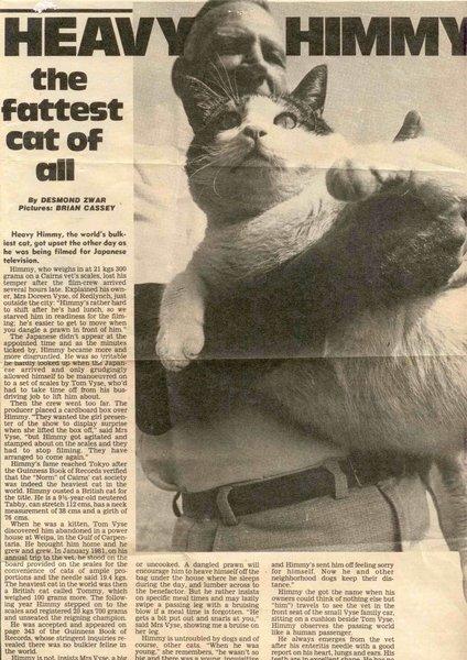 Самый толстый кот на земле и его печальная история кот, лишний вес, печаль, Книга рекордов Гиннесса, негатив, животные