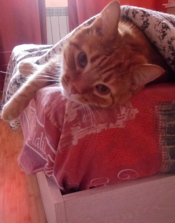 Ещё один Дворянский кот в семейство пикабу Кот, Рыжий, Кекс, Милота, Длиннопост