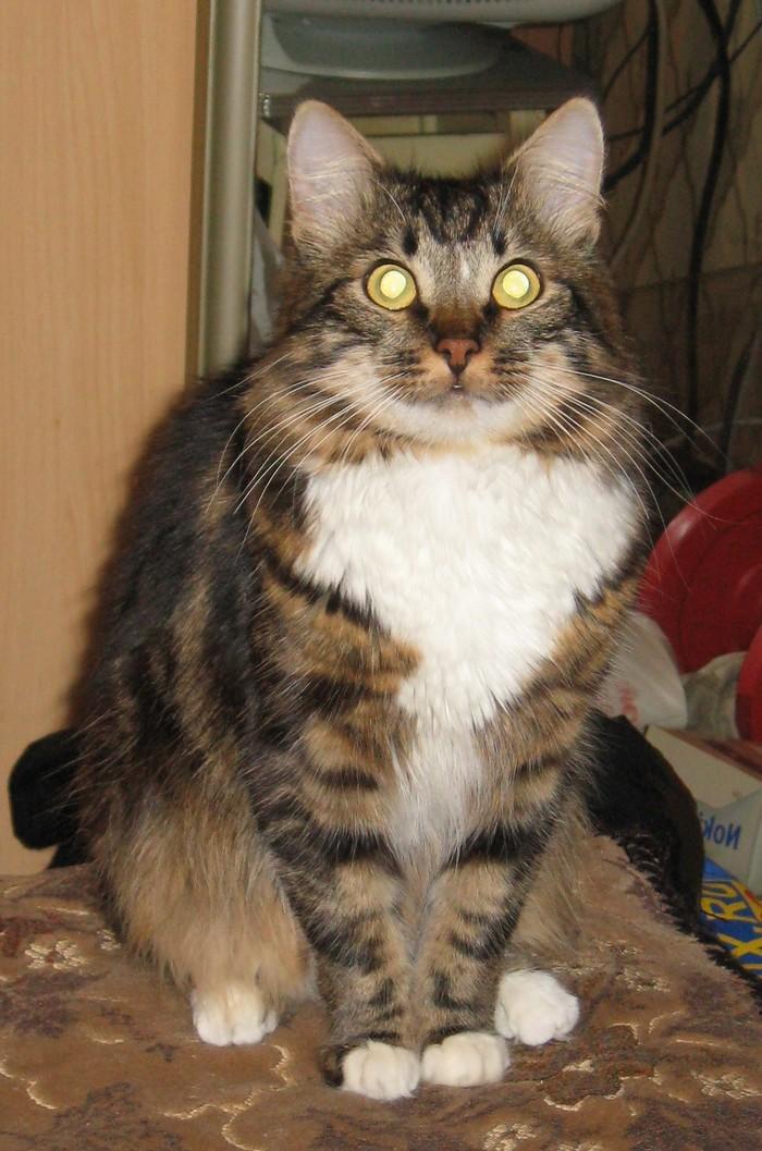 Потерялся кот, Москва, Отрадное Потерялся кот, Потерялся, Домашние животные, Животные, Москва, Отрадное, Без рейтинга, Кот