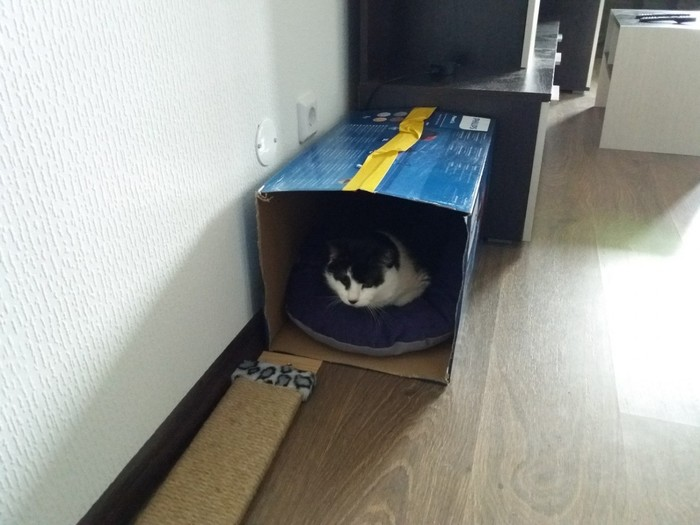 Слепой кот жил в железной клетке, потому что другие кошки его били и забирали еду кот, приют для животных, длиннопост, домашние животные