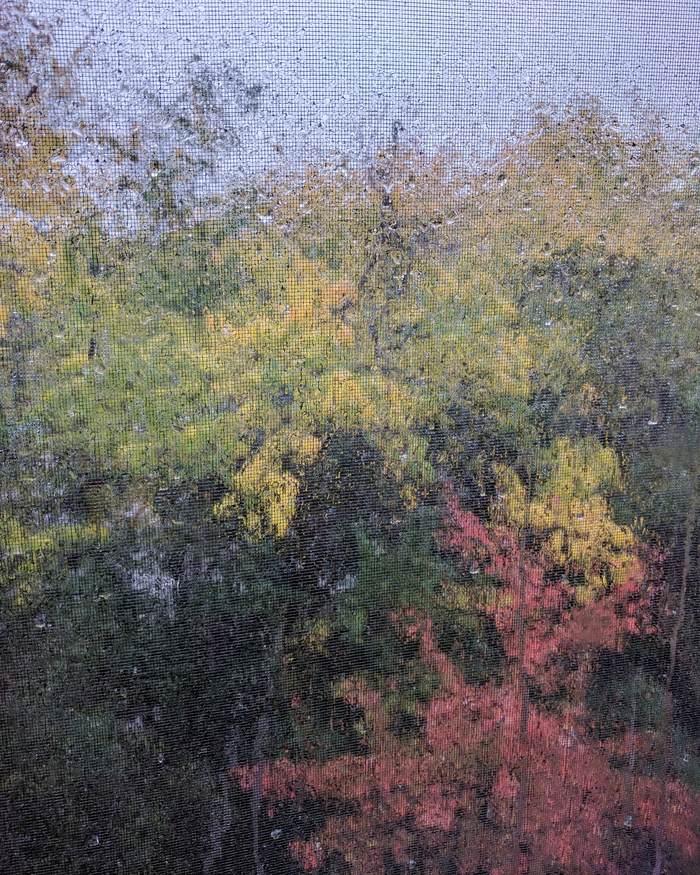 Из-за дождя на сетке, пейзаж за окном стал похож на акварельную живопись
