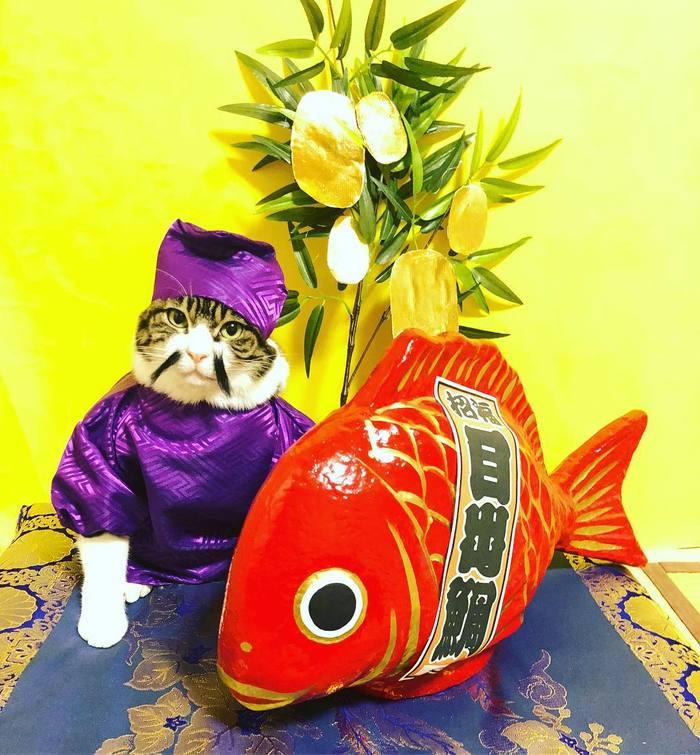Японка каждый день наряжает своего кота к ужину кот, adme, япония, instagram, rinne172, длиннопост
