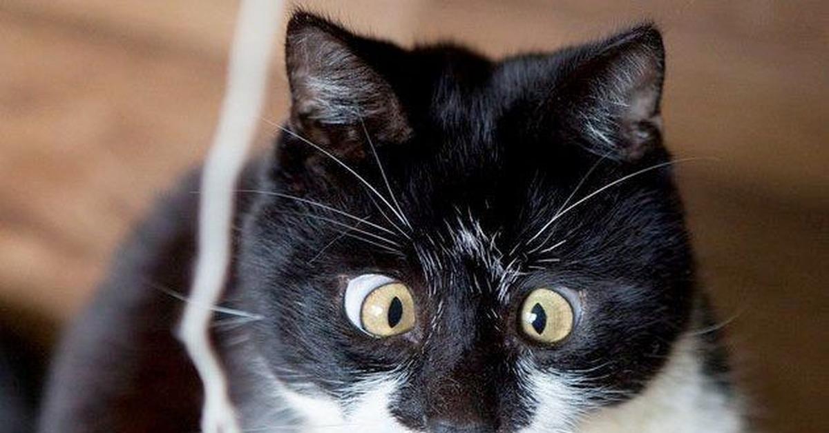 коты с косыми глазами фото
