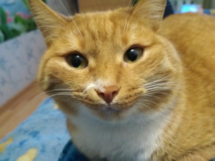 Кот подруги впервые попробовал апельсин=))