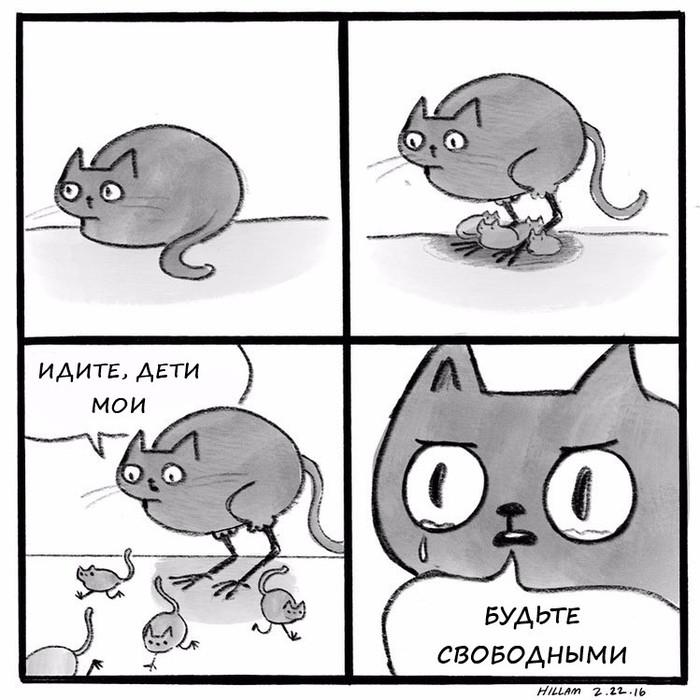Котица