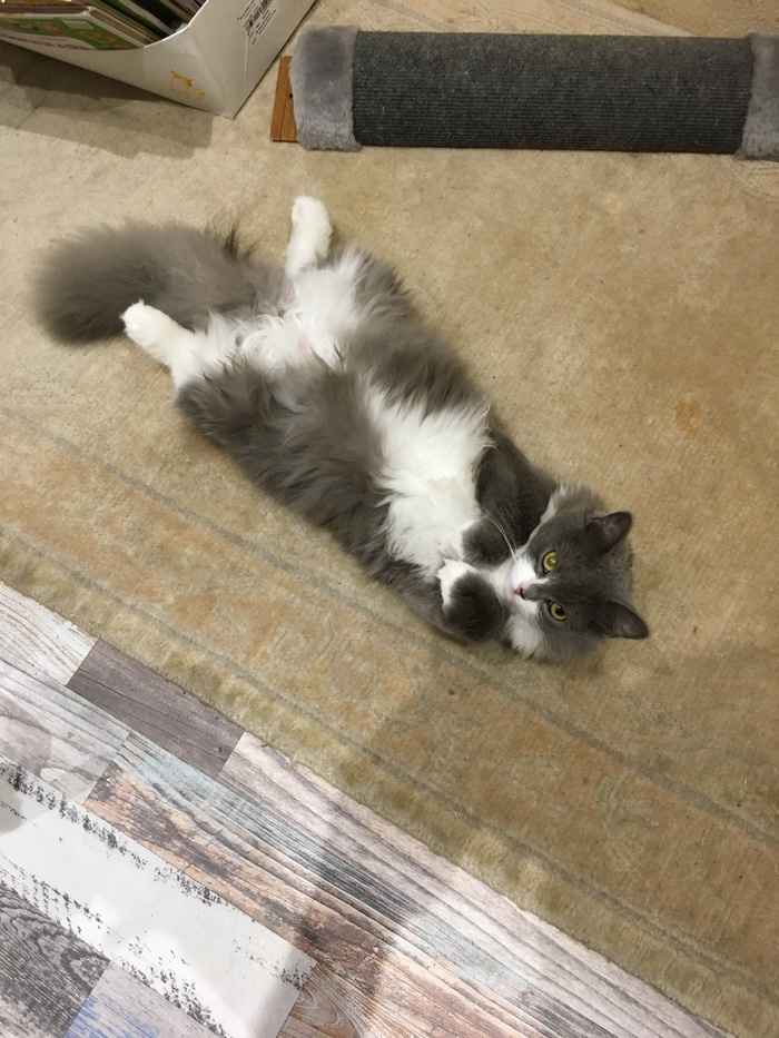 Кошка-Тишка Усы лапы хвост, Лапы вверх, Кот, Длиннопост