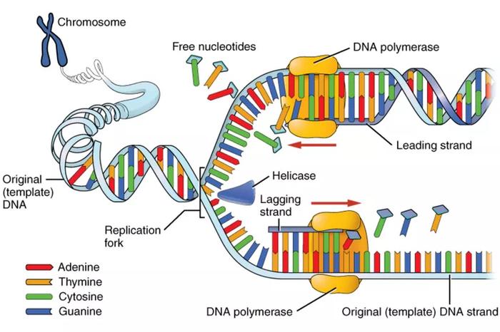 Рак для чайников Онкология, Рак, Для чайников, Генетика человека, Мы все умрем, Длиннопост