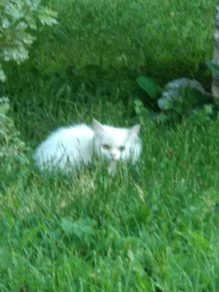 Найдена кошка или кот! Кот, Пропажа, Беглец, Разыскивается, Без рейтинга