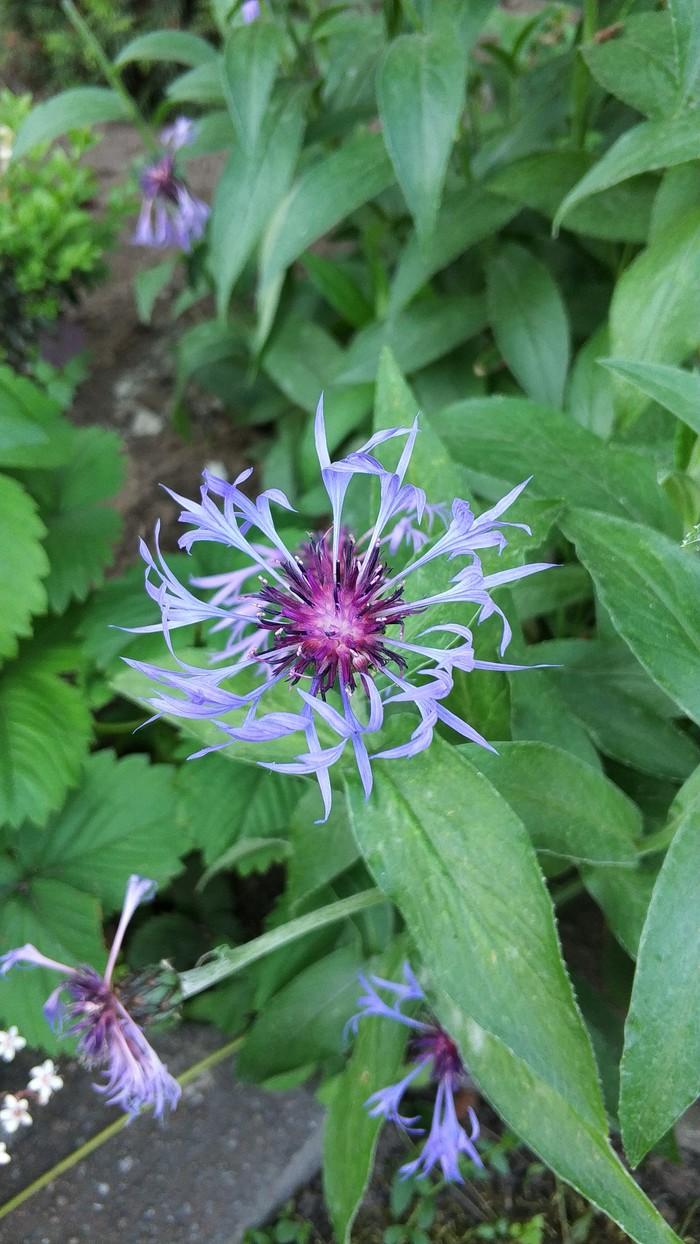 Немного летнего Цветы, Лето, Красота природы, Длиннопост