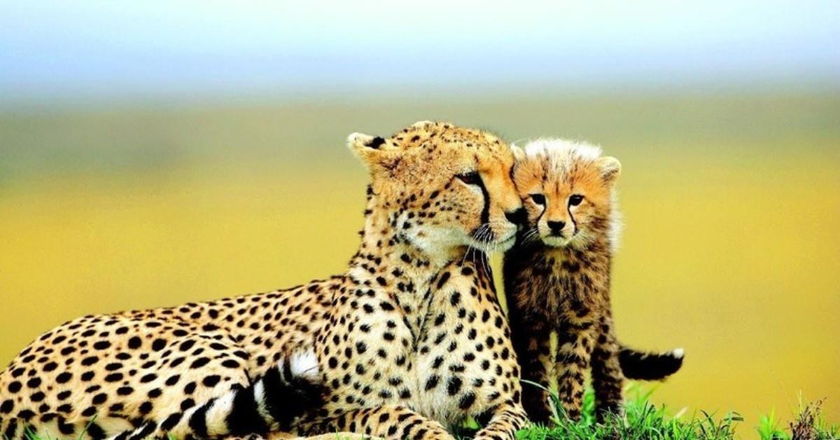 животных картинки про самых красивых животных люди при
