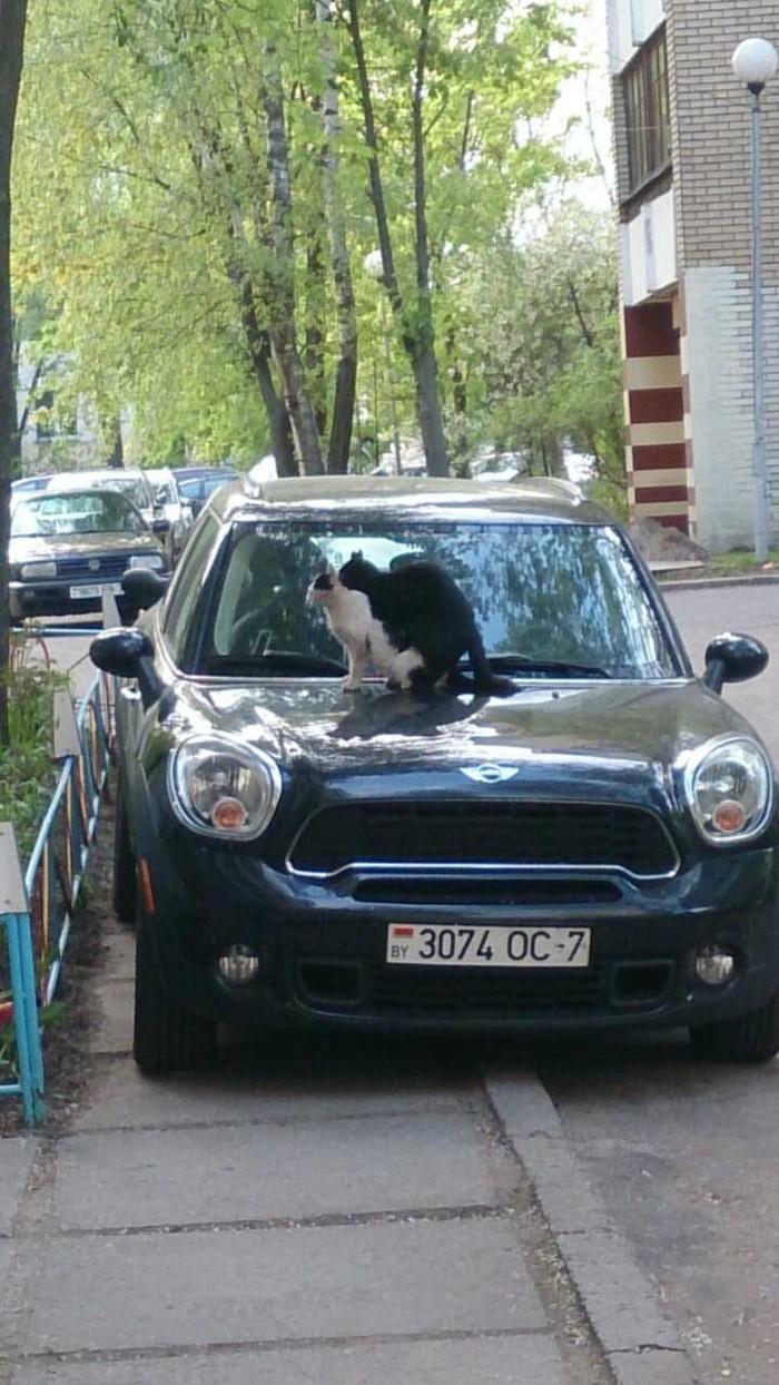 Ну, Васька... Кот, Секс, Длиннопост