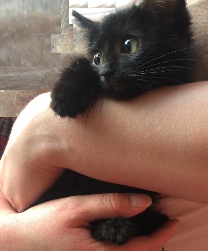 Котенок Уголек очень хочет найти дом кот, длиннопост, в добрые руки, без рейтинга, Москва, спасение животных