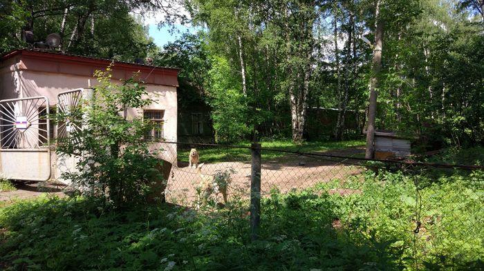 Радиоцентр-9 Урбанфакт, Заброшенное, Вылазка, Московская область, Длиннопост