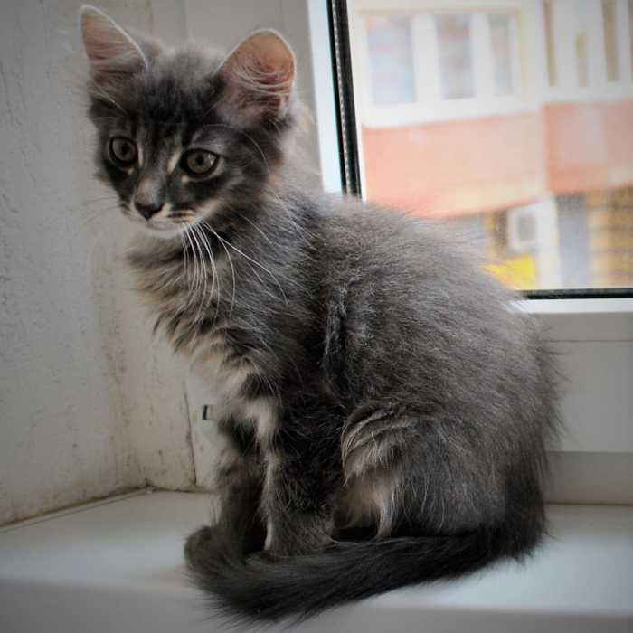 Сила пикабу! Ищу хозяина котенку! Help! SOS! ALARM! кот, котомафия, отдам, халява, Москва, длиннопост, в добрые руки