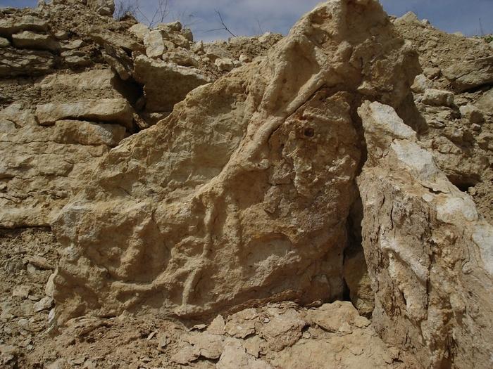 Вы спрашивали о палеонтологии. Палеонтология, Интересное, Познавательно, Вопрос, Ответ, Прошлое, Доисторические животные, Сборник, Видео, Длиннопост