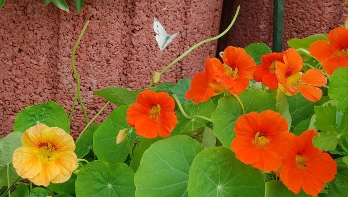 Красота рядом. Фотография, Мобильная фотография, Цветы, Бабочка, Длиннопост
