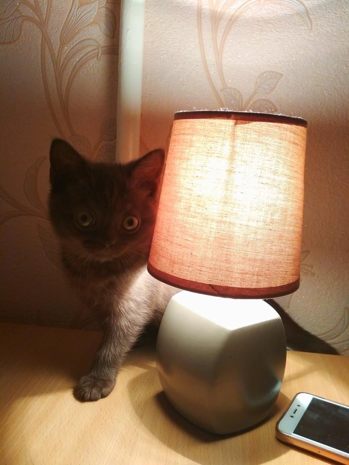 Кот и лампа