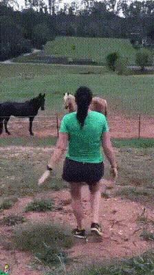 """""""- Скажем ей, что ограда под напряжением? - Нет!"""" Гифка, Животные, Лошади, Девушки, Розыгрыш, Электричество, Reddit"""