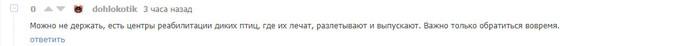 Раненый стриж. Продолжение. Стриж, Раненая птица, Ростов-На-Дону, Лига Орнитологов, Длиннопост