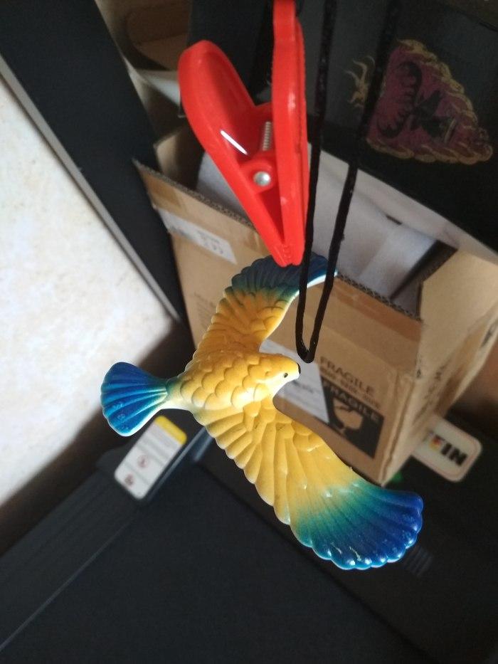 Глюк матрицы Сбой матрицы, Балансирующая птица, Фотография, Длиннопост
