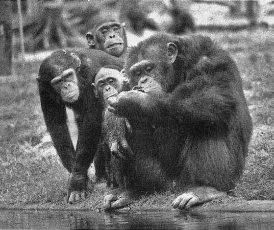 Реальный секс обезьяны и человека