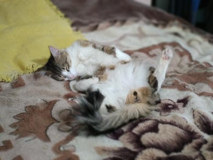 Мой Тишенька Кот, Котомафия