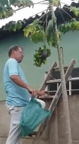Как легко избавиться от осиного гнезда:
