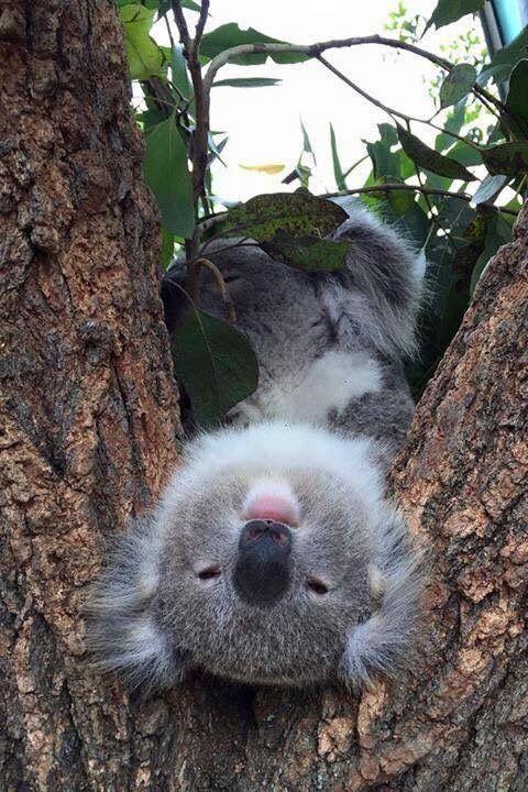Привет из Австралии.