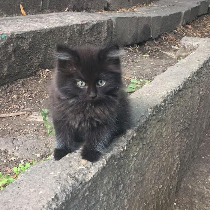 Котенок Дворовый котенок, Чертаново, Москва, Кот