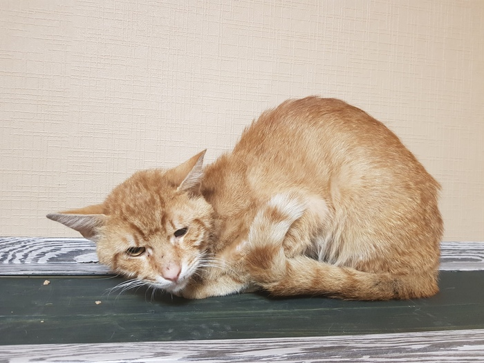 Психологическая помощь коту Кот, Помощь, Без рейтинга