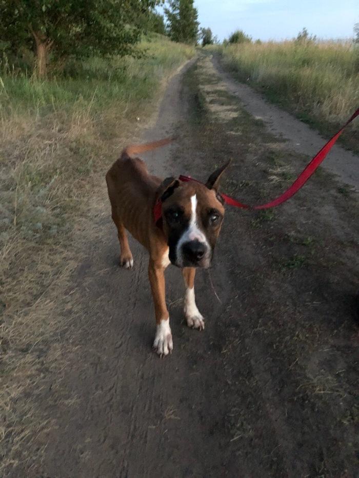 Помощь собаке Без рейтинга, Не мое, Помощь, Собака, Самарская область, Длиннопост, ВКонтакте