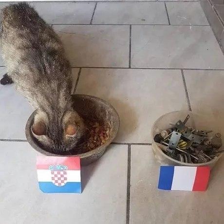 Кот все предсказал