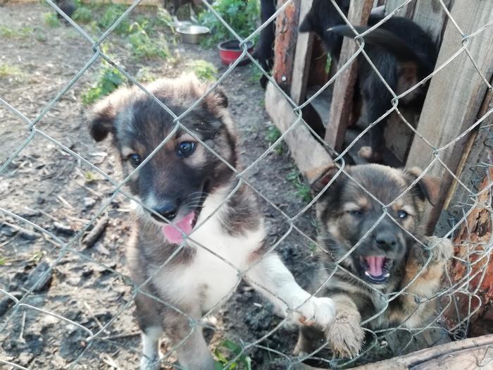 """Приют для животных """"Шанс"""". Приют для животных, Помощь, Длиннопост, Доброта, Сострадание, Сасово, Рязанская область"""
