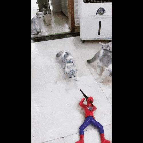 """""""Сумасшедший Человек-паук расстреливает невинного котёнка на глазах у его семьи"""""""