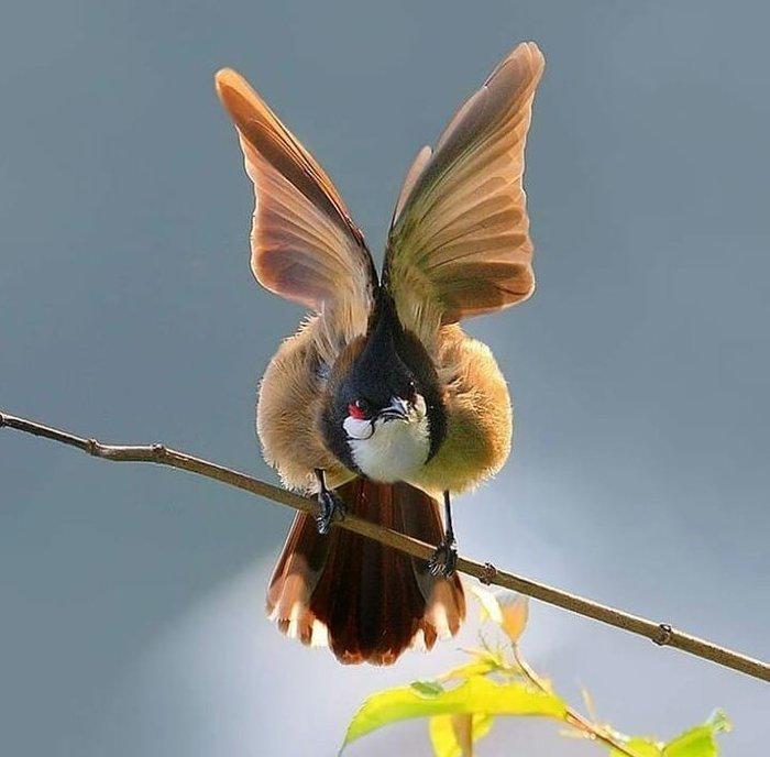 Словно бабочка