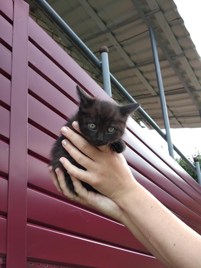 Котята в дар, Витебск. Мальчик и девочка. Котята, Витебск, Длиннопост, Кот, В добрые руки