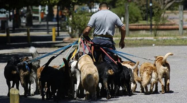 Собака - друг аргентинца Аргентина, Жизнь в аргентине, Аргентинский дог, Иммиграция, Собаки и люди, Длиннопост, Собака