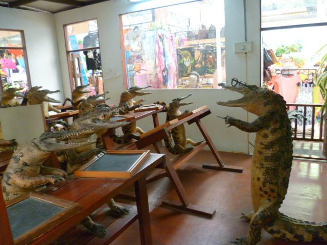 Заговор Школа, Крокодил в школе, Шпион