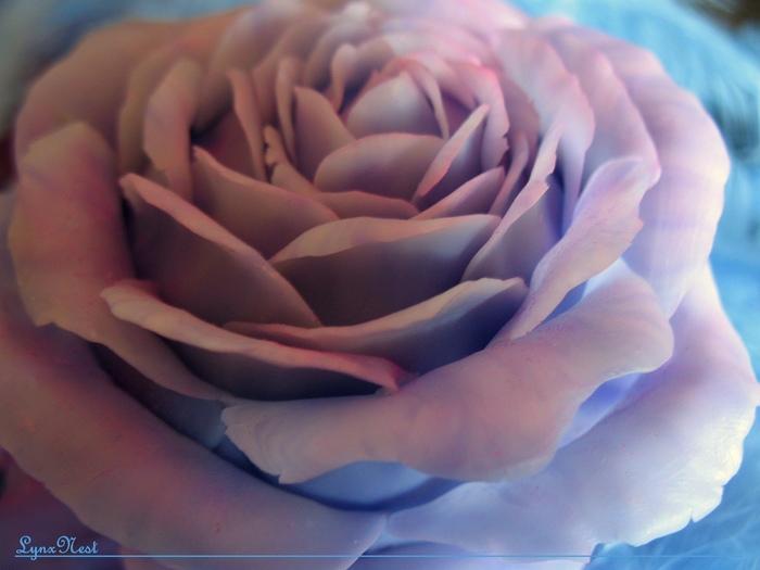 Цветочный фонарь и результаты розыгрыша блокнота Рукоделы дарят, Фонарь, Полимерная глина, Рукоделие без процесса, Видео, Длиннопост