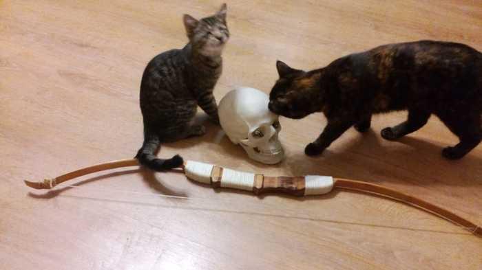 Слепой кот Хёд* на тропе войны. Кот, Слепой кот Хёд