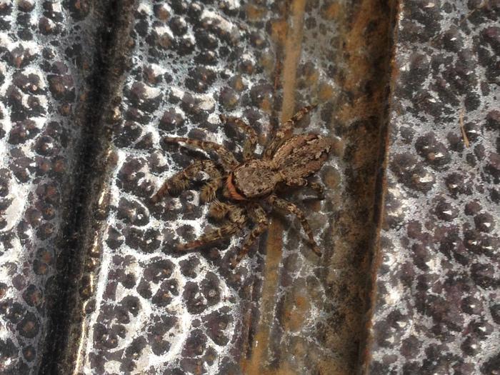 Красивый паук Паук, Арахнология, Моё, Видео