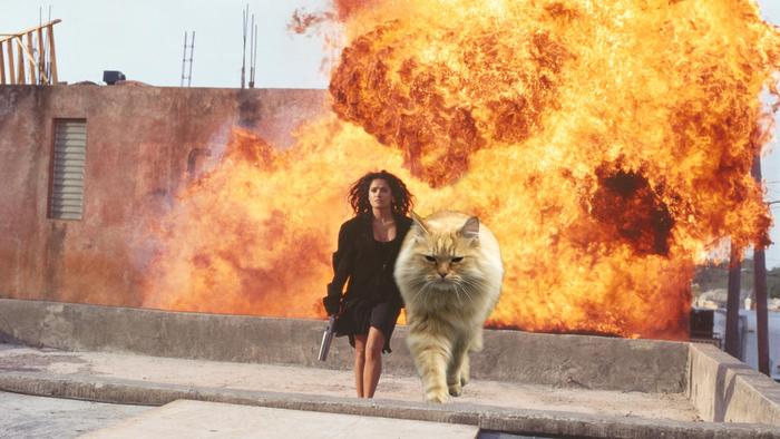 Которепортаж ч. 2: кот разрушитель миров (мой рыжий герой) Кот, Взрыв, Photoshop, Крутой парень, Длиннопост