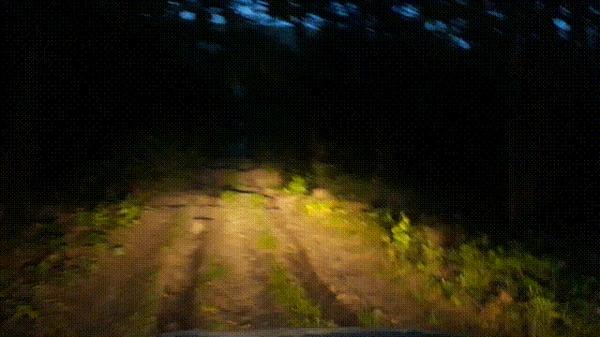 Лес. Ночь. Красота