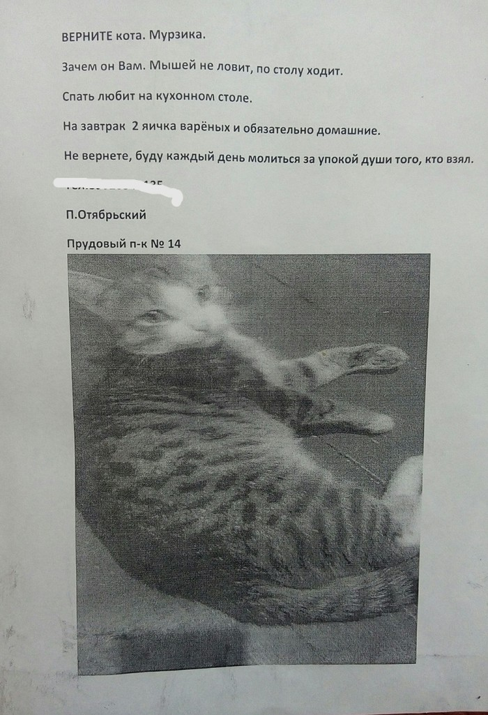 Верните кота,сволочи! Объявление, Кот