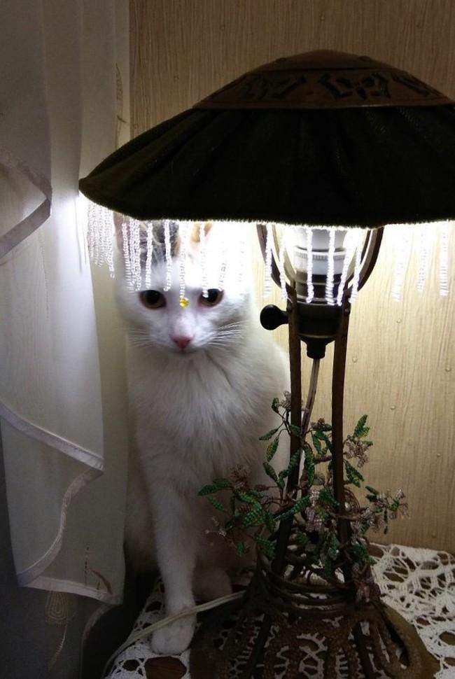 Сижу у родителей, делюсь историями Почти котолампа, Питомец, Кот, Кот с лампой
