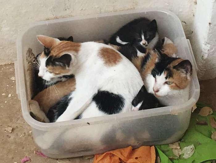 А у нас сегодня кошка родила вчера котят Кошкин дом, Котята, Кот