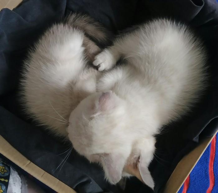 Котячая любовь